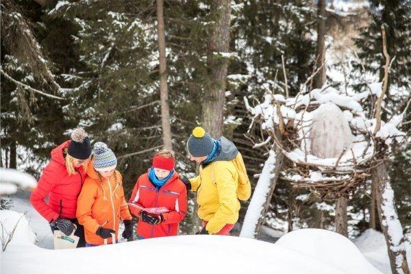 sentiero tematico la foresta dei draghi in inverno